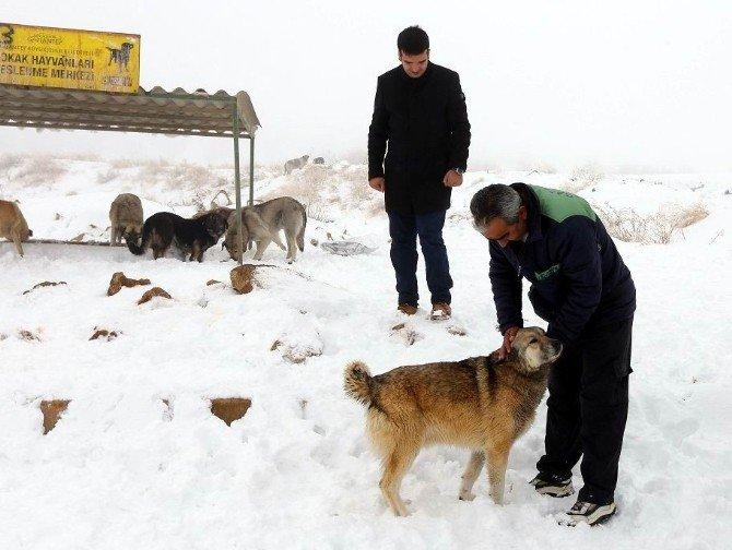 Sokak Hayvanlarından Yem Bırakan Görevlilere Sevgi Gösterisi