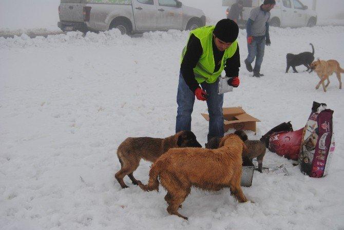 Yavru Köpekler Donmaktan Kurtarıldı