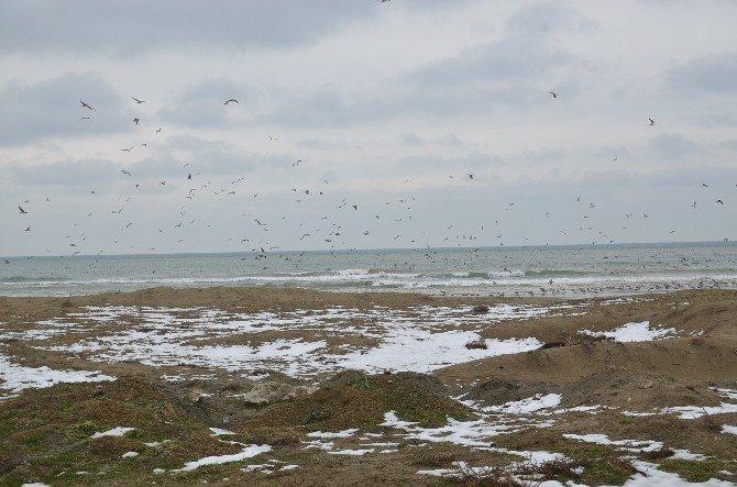 Kar Suları En Çok Martılara Yaradı