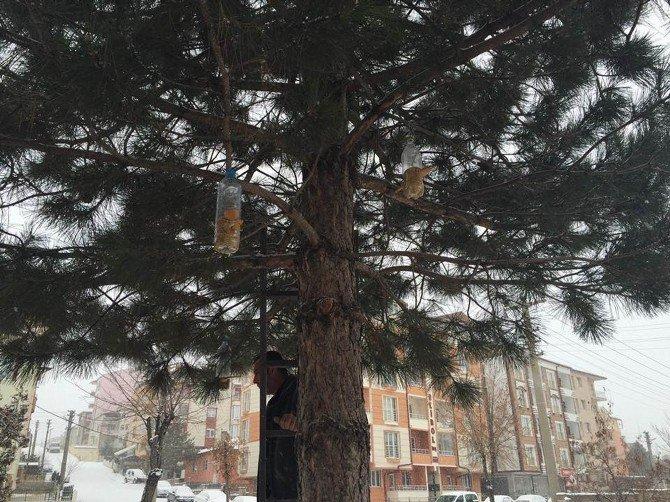 Öğrenciler Ağaçlara Kuş Yemliği Astı