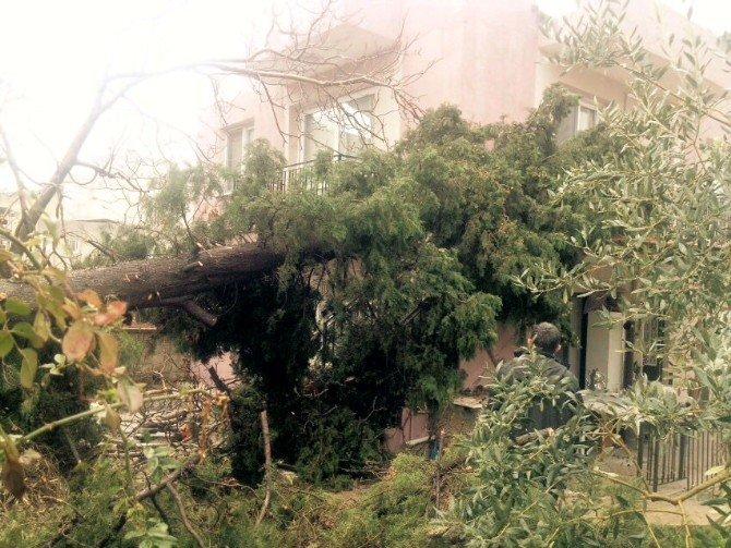 Söke'de Fırtına Ve Yağış Çatıları Uçurdu, Ağaçları Devirdi