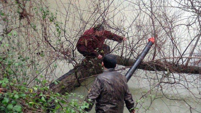 Manavgat Çayı'na Atlayan Kadın Ağaç Dalına Tutunarak Kurtuldu