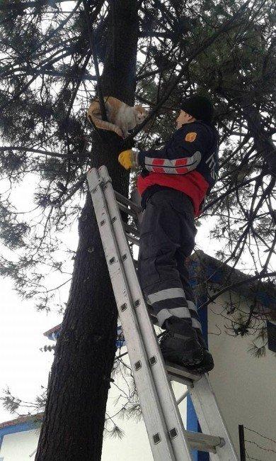 Ağaçtan İnemeyen Kediyi Çaycuma İtfaiyesi Kurtardı