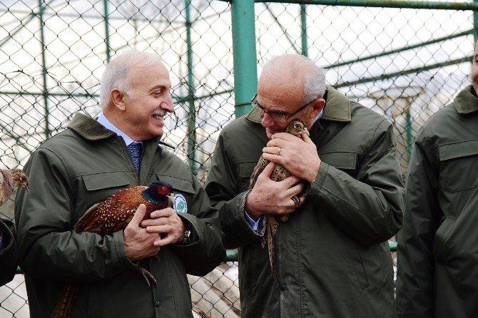 Vali Ve Başkan Hayvanları Yemledi