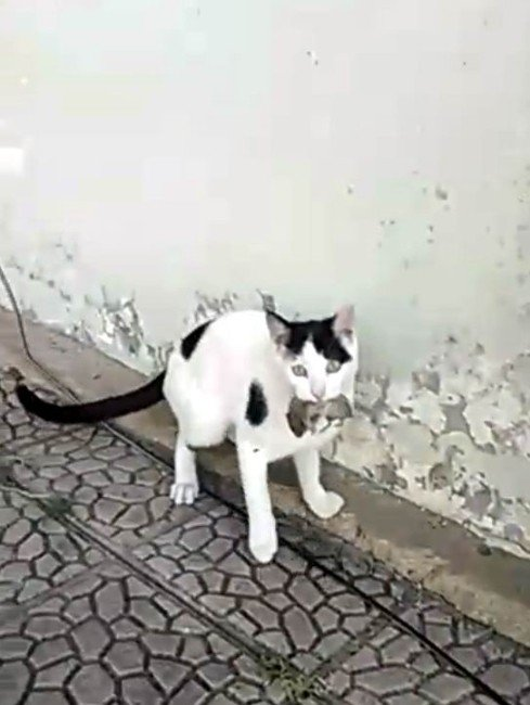 Kedi Fareyle Dakikalarca Oynadı