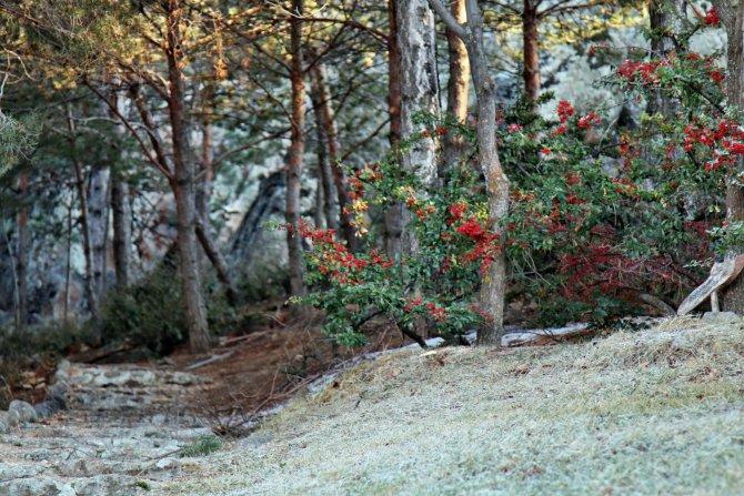 Japon bahçesi kış aylarında ayrı bir güzel