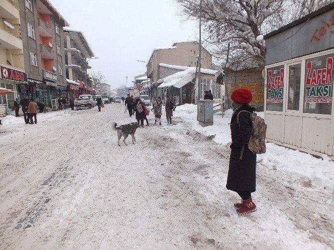 Malazgirt'te Başıboş Köpek Sorunu