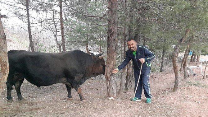 Artvinli Boğa Yetiştiricilerinden İspanyol Boğa Yetiştiricilerine Ders