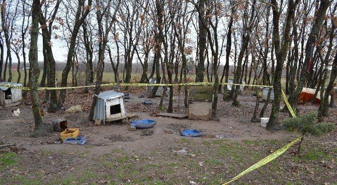 Ormana Bırakılan 6 Aylık Cenin, Köpek Tarafından Bulundu