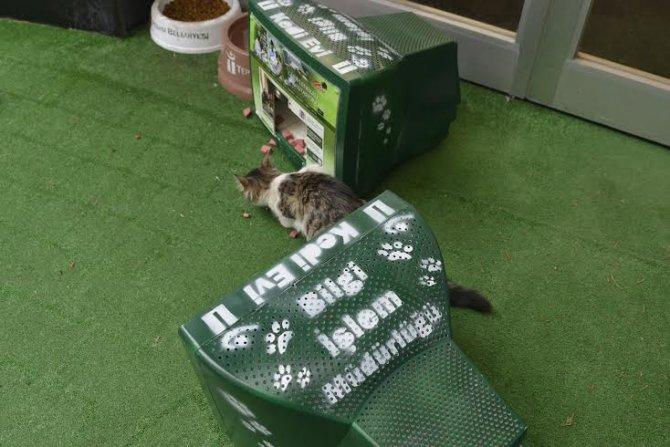 Eski monitörler kedi evi oldu