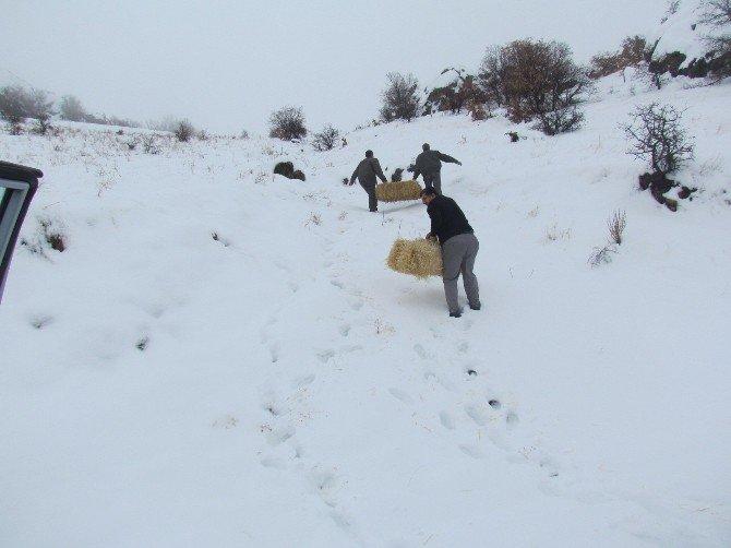 Elazığ'da Yaban Hayvanları İçin Saman Ve Yem Bırakıldı