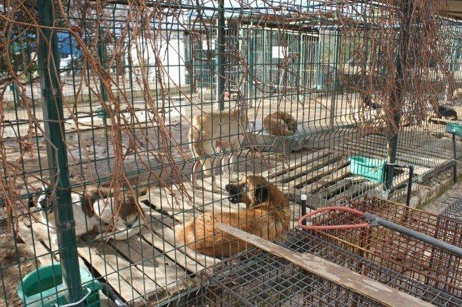 Hatay Büyükşehir Belediyesi, Sahipsiz Ve Bakıma Muhtaç Hayvanlara Sahip Çıkıyor