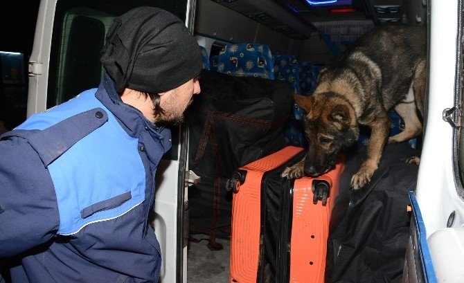 Minibüste 145 Kilo Esrar Ele Geçirildi