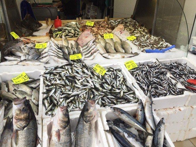 Havalar Isındı Balık Fiyatları Düşüyor