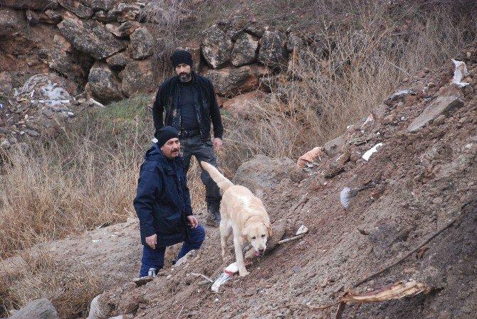 Kayıp İki Çocuğu Arama Çalışmalarına, İki Özel Eğitimli Köpekle Devam Ediliyor