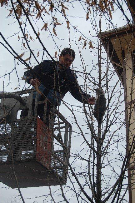 Azdavay'da İtfaiye'nin Kedi Kurtarma Operasyonu