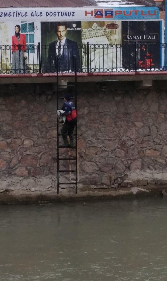 Suya düşen yavru kediyi donmaktan itfaiye eri kurtardı