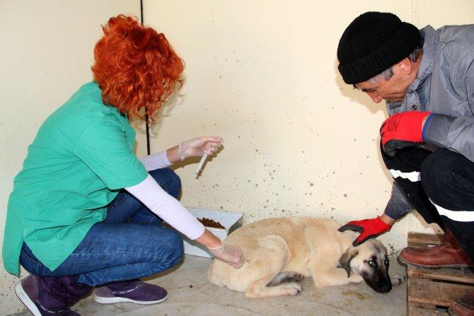 Çankaya Belediyesi sokak hayvanları için seferber oldu