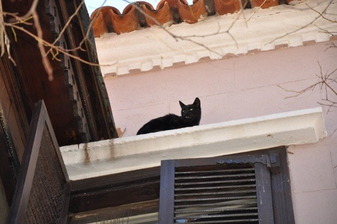 Kedi İçin Seferber Olundu