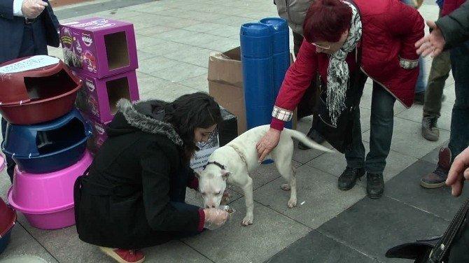 Genç Eller Derneği Üyeleri Sokak Hayvanlarını Unutmadı