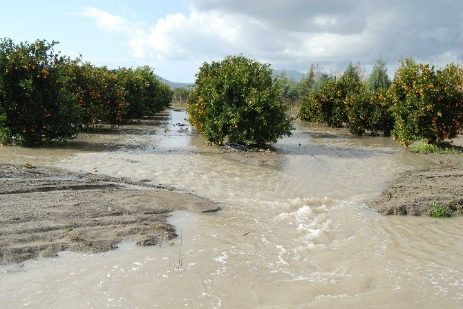 Ortaca Ve Dalaman'da Evler İle Tarım Arazilerini Su Bastı