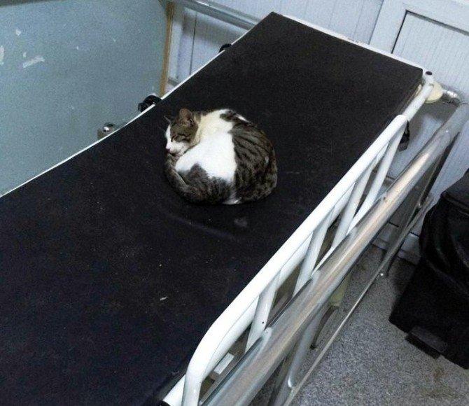 Acil Servis Sedyesinde Uyuyan Kedi