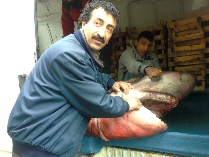 700 kiloluk köpekbalığı yakalandı