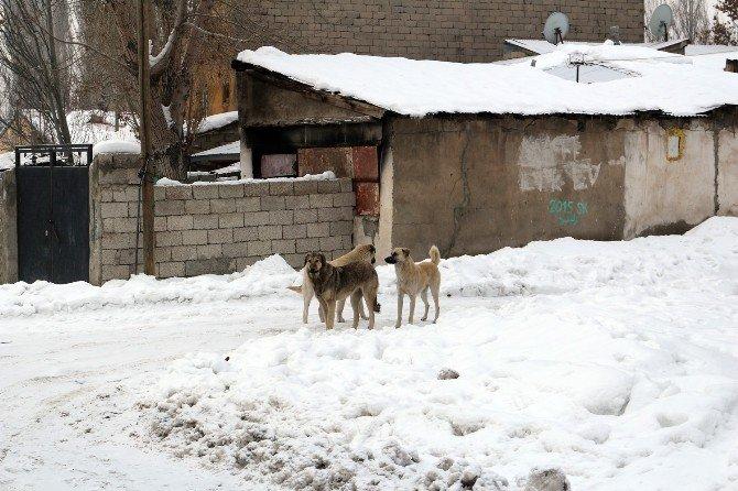 Ağrı'da Dondurucu Soğuklar