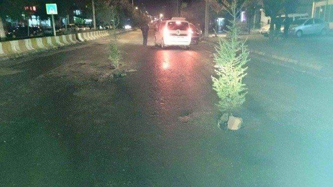 Çukurlara Tepki Gösteren Vatandaşlar Cadde Ortasına Çam Ağacı Dikti