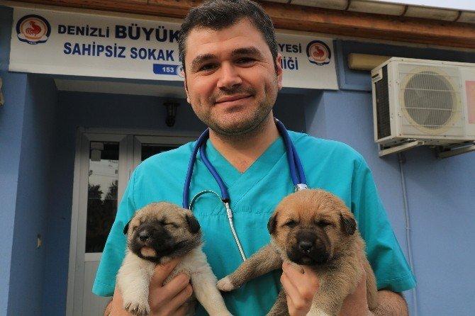 Denizli'deki Sokak Hayvanları Kliniği Binlerce Sokak Hayvanını Tedavi Etti