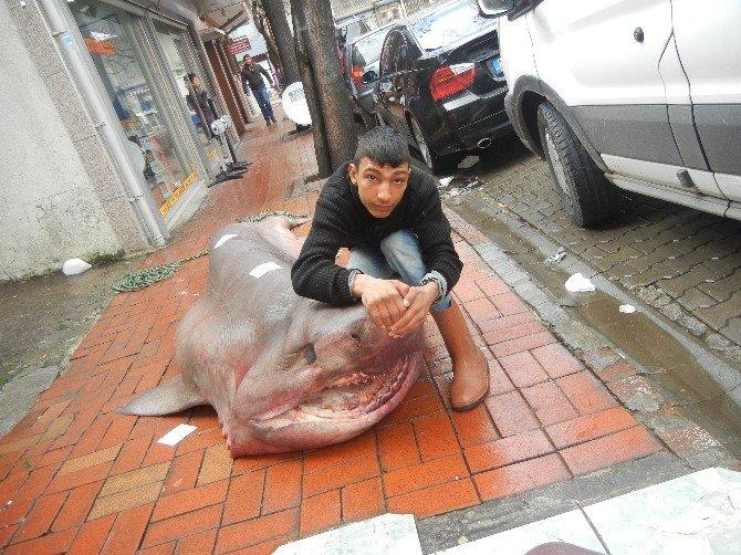 Dev Jawslar Ağlara Takıldı