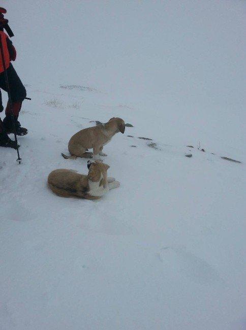Donmak Üzere Olan Köpekleri Hayata Bağladılar...