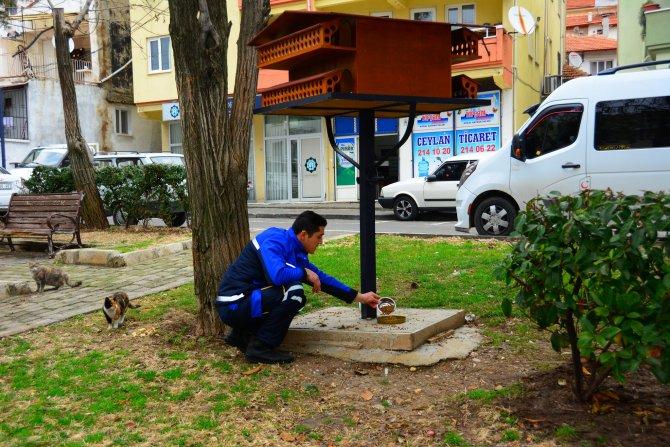 Muğla'nın sevimli dostları kışın da güvende