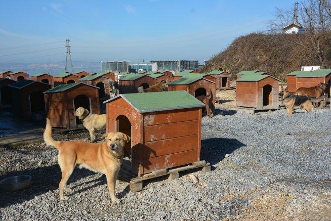 Büyükçekmece'de sahipsiz köpeklere 4 bin 500 yeni yuva