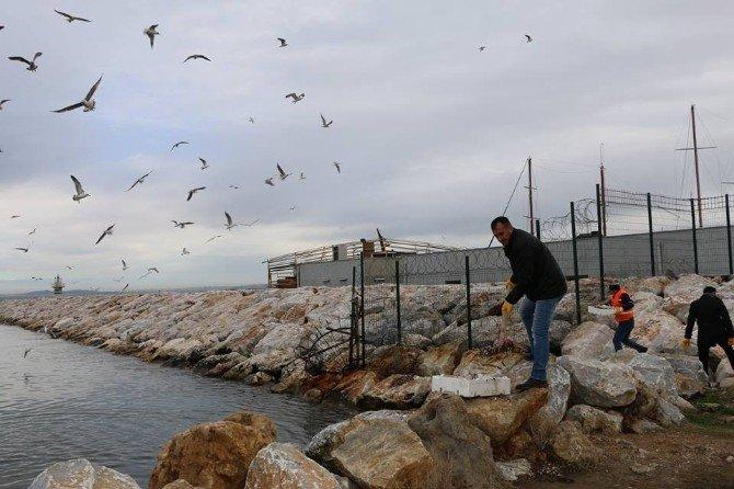 Yalova'da Balık Artıkları Martılara Yem Oluyor