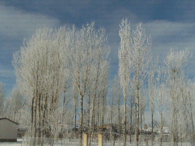 Özalp İlçesinde Ağaçlar Dondu
