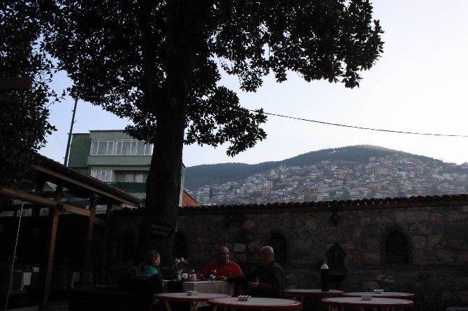 Zeki Müren Manolya Şarkısını Bu Ağaçtan İlham Alarak Besteledi