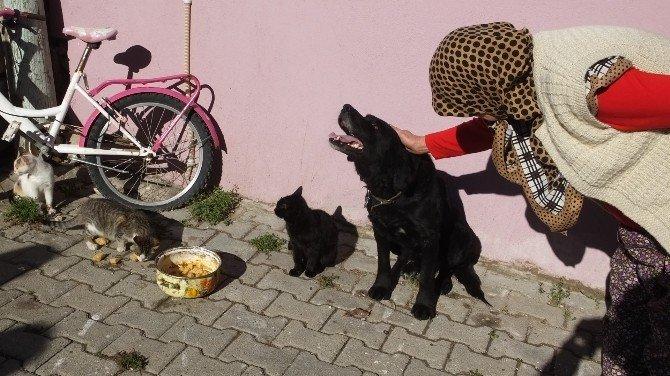 Havran'da Köpek İle Kedilerin Dostluğu Hayran Bıraktı