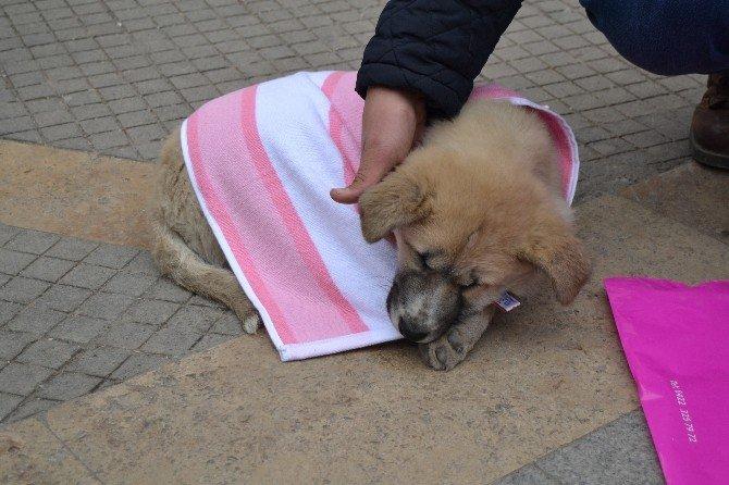 Yaralı Köpeğe Merhamet Eli