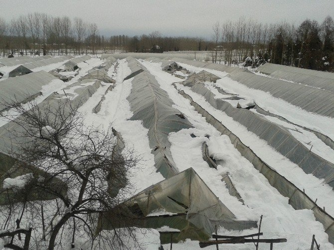 Kar, Seralara Büyük Zarar Verdi