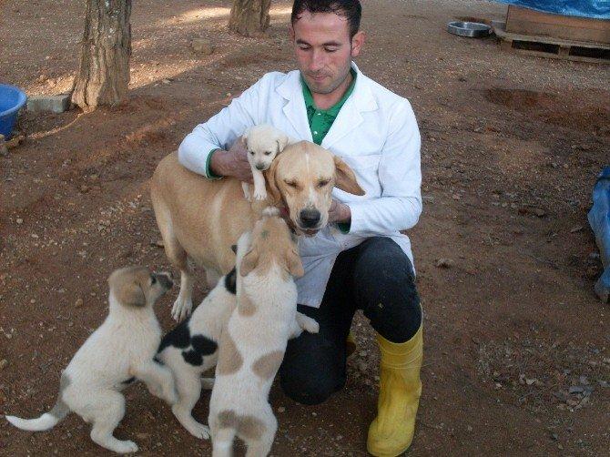 5 Bin 78 Sokak Köpeğinin Tedavi Ve Bakımı Yapıldı