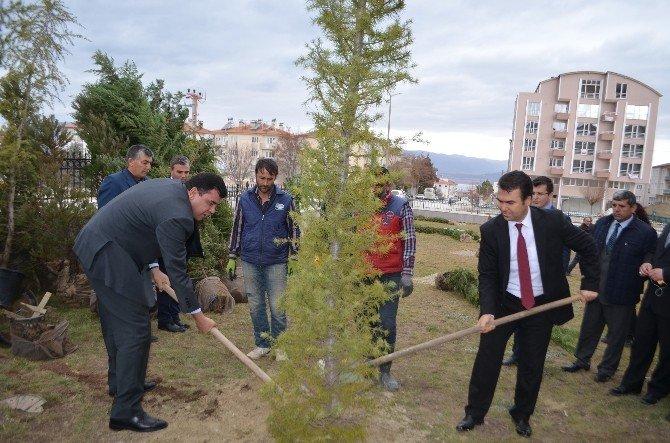 Adliye Personelinin Dikili Ağacı Oldu