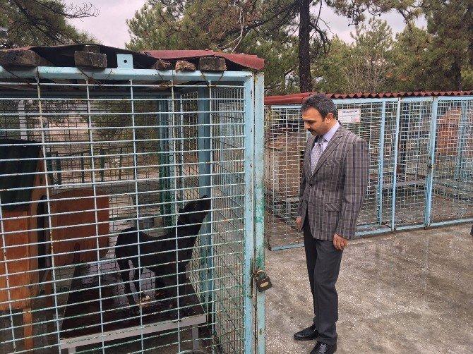 Çorum Belediyesi, Sokak Hayvanlarına Sahip Çıkıyor