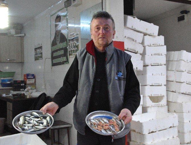Yerli Hamsi Bitti, Gürcü Hamsisi Satılıyor