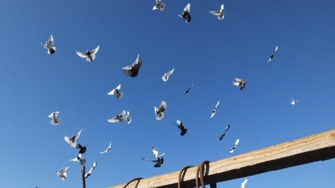 Burhaniyeli Besicinin Güvercin Sevgisi