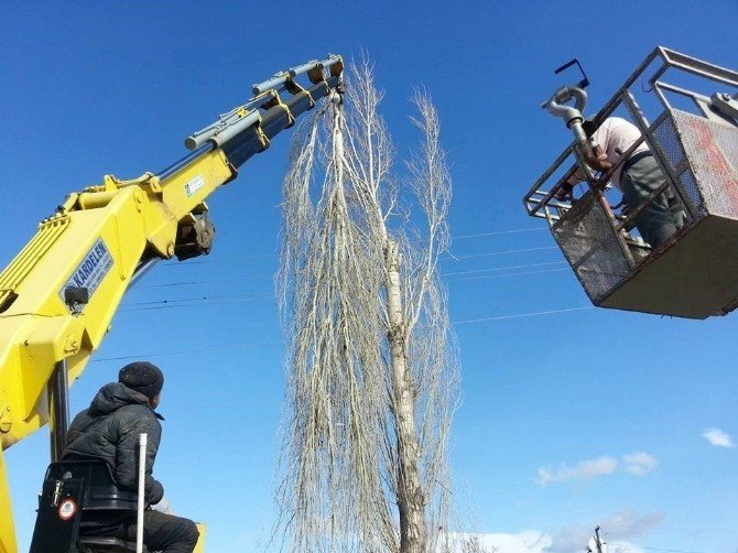 Hisarcık'ta Ağaç Budama Çalışmaları