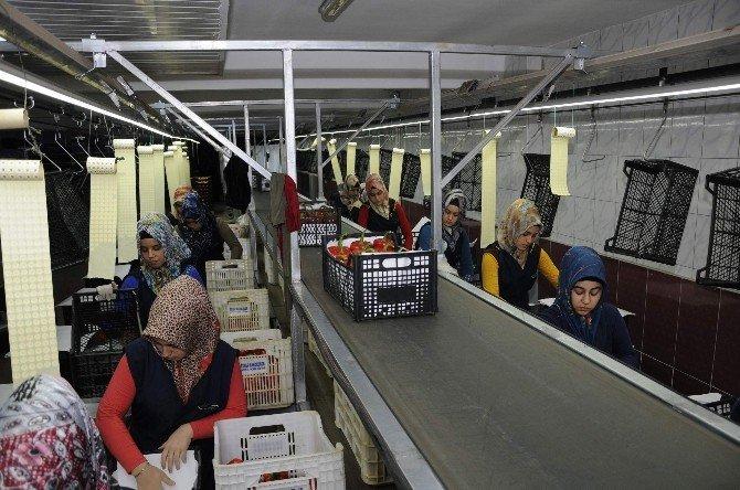 Antalya,turizmden Sonra Tarımda Da Ümidini Irak Ve Suudi Arabistan'a Bağladı