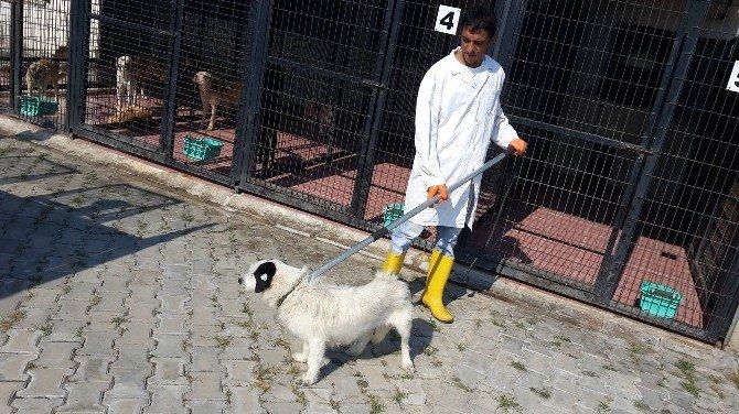 481 Sokak Hayvanı Kısırlaştırıldı, 353 Sokak Hayvanı Tedavi Edildi