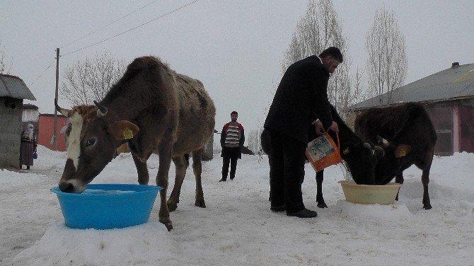 Dondurucu Soğuklar Hayvan Sahiplerini Etkiledi