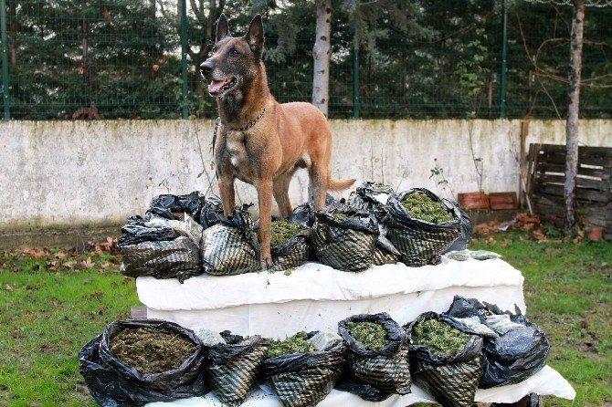Narkotik Köpeği Alfa'dan Bingo